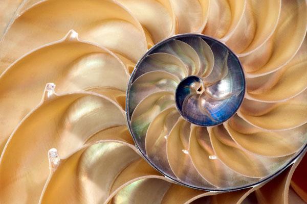 Jamie Kiechlin – NautilusShell