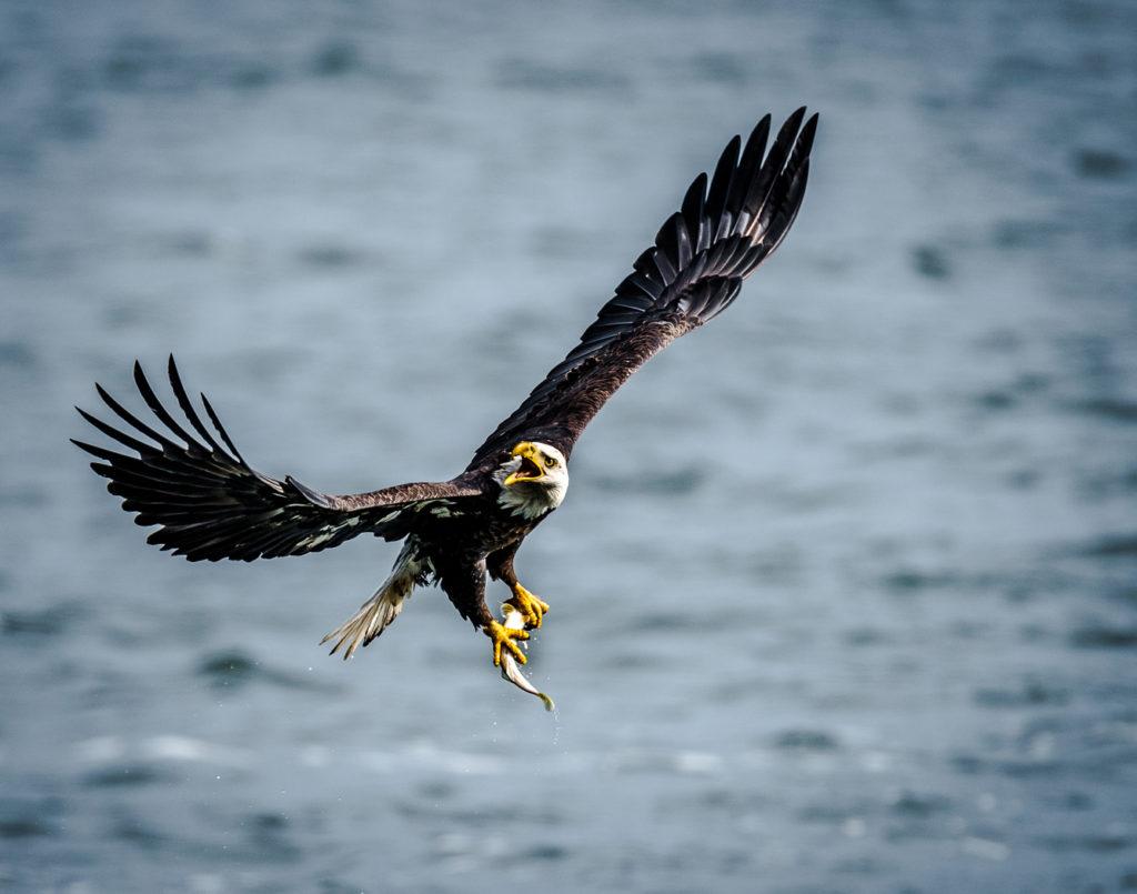 Eagles-Fresh-Catch_1737-2-1-1024x805.jpg