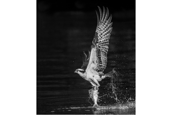 Mono_Bill Millhouser_Early-Morning-Catch_clr