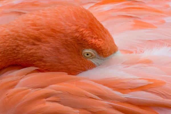 Class2_Laurie Kuyk_Flamingo
