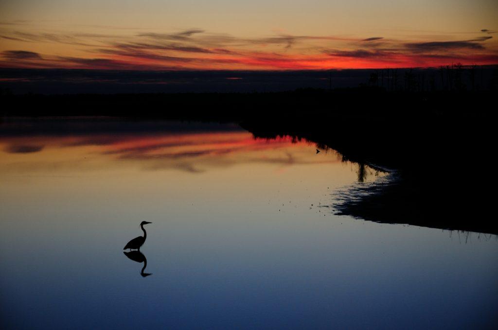 Blackwater-Sunset-by-Bill-Corbett-1024x679.jpg