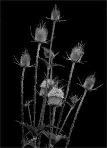 Class3D_1st_Kieu-hanh-Vu_Wildflowers-216x300.jpg