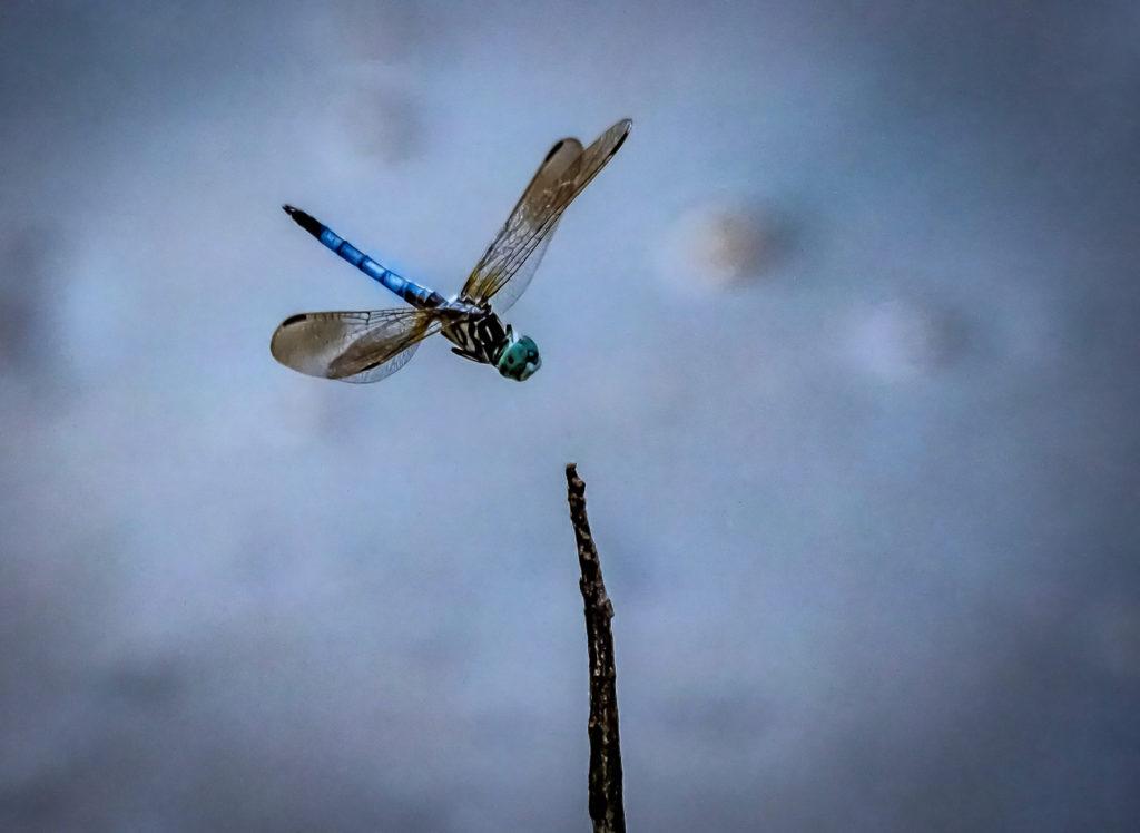 FlyingCritters65--1024x748.jpg