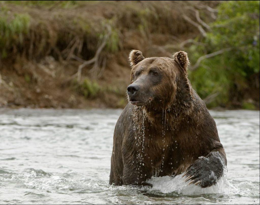 Bear-Photo-1024x807.jpg